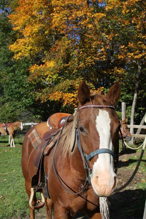 Pony rides (4)